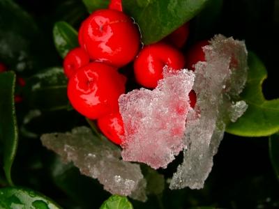 Rote Beeren mit Eis