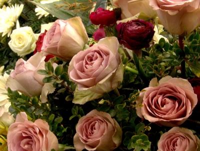Besondere Rose