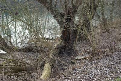 Am alten Neckar 1