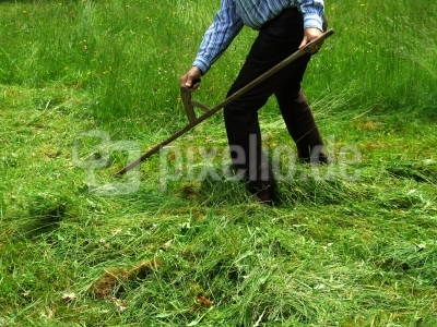 Grasmähen mit Sense