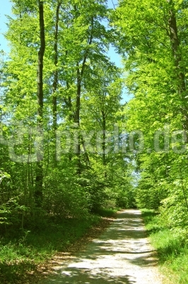 Waldweg im Laubwald