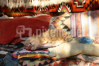 Katzenschlafplatz