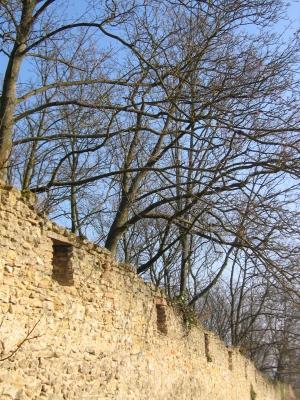 Landskrone Oppenheim