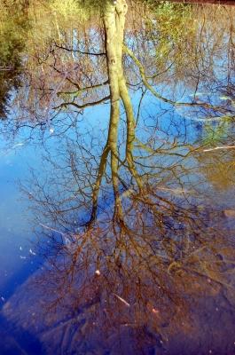 Trugbild Baumspiegelung im Wasser