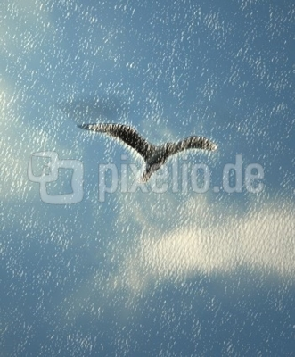 Flug der Möve
