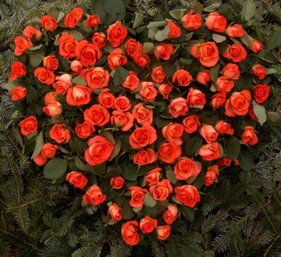 Rosen Herz der Liebe