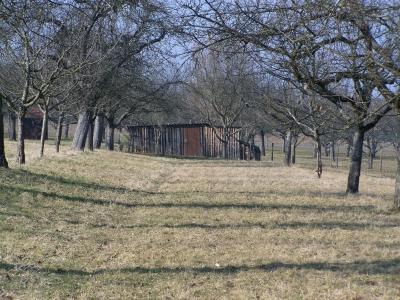 Brennholzlager auf Streuobstwiese