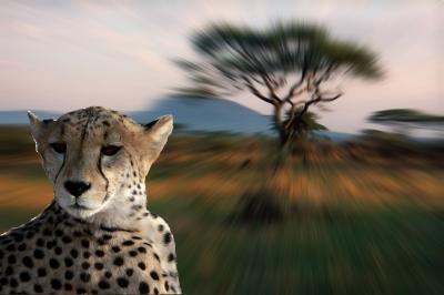Die Serengeti ruft / 1