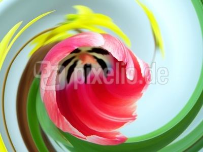 Tulpen-Wirbel