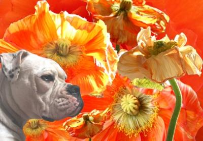 Blumenkind im Glück