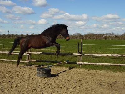 Mein süßes Pferdchen