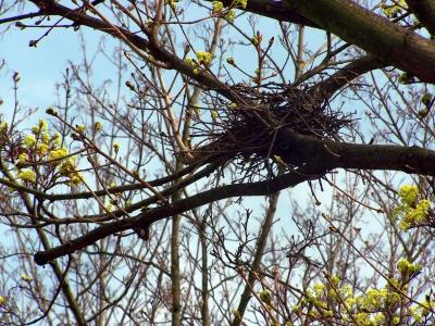 Vogelnest - Rohbaufertig