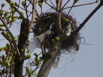 Vogelhochzeit mit Brautschleier