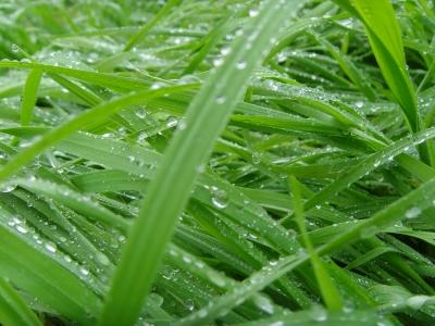 Regen das Lebenselexier