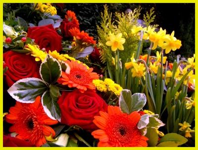 Rosen & Blumen - Kunterbunt