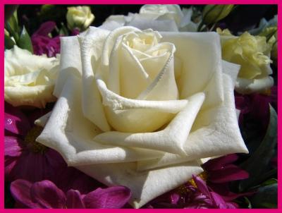Die Rosen Königin