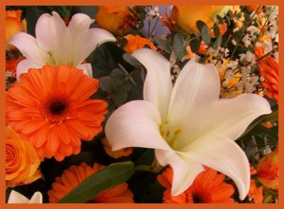 Blumen & Blüten