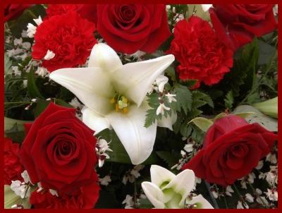 Blüten rot & weiss
