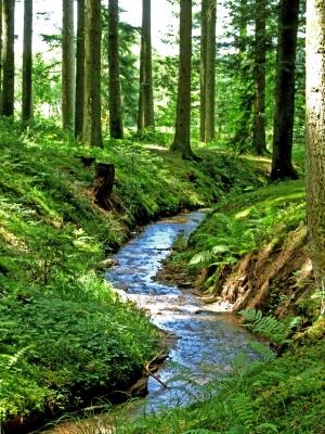Waldbach im Waldachtal