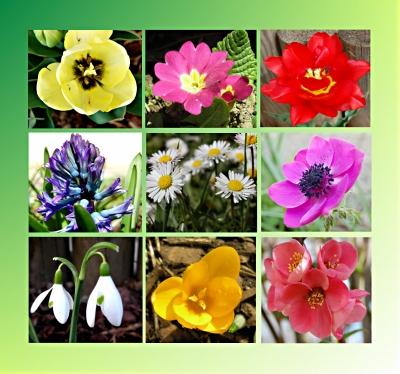 Frühlingsblumencollage