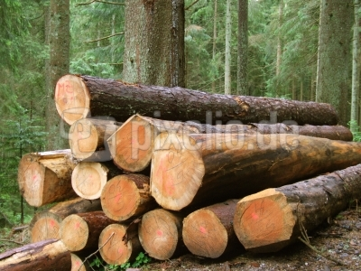 Holzernte im Schwarzwald