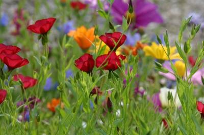 Nachbars Blumenwiese