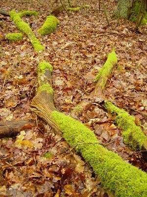 Moos und feuchte Blätter