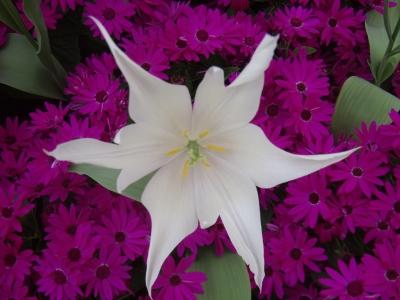 Blütenzauber , 2te
