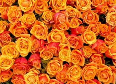 Rosen ohne Ende