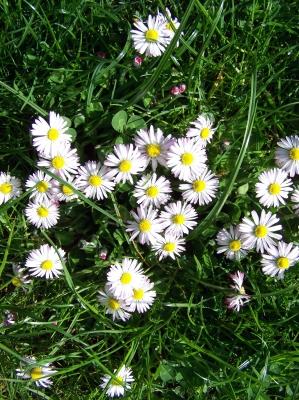 Frühlingsgrüße aus unserem Garten