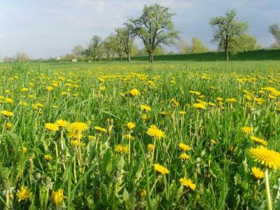 Frühling hinterm Deich