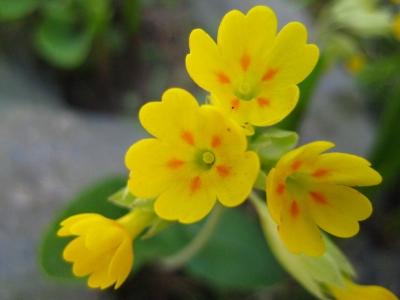 gelbe Blüten 5