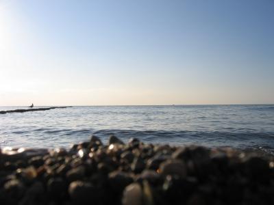 Möwe am Hiddenseer Strand
