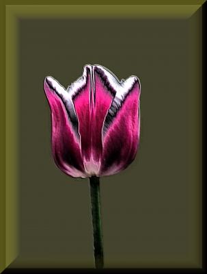 etwas abstrakte Tulpe