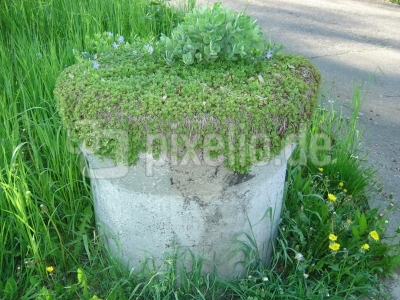 bepflanzter Steinkoloß