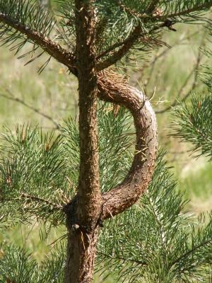 X-mas tree for take away!