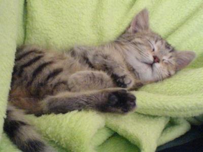 Babykatze schläft 2