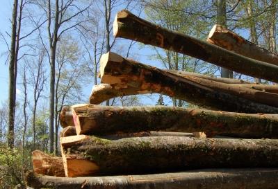 Brennholzpolter