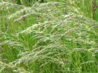 Gräser 2