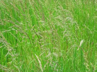 Gräser 3