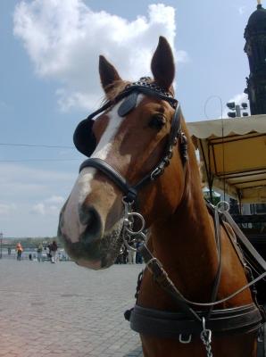 Kutsch Pferd