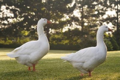 Gustav und Gerlinde Gans