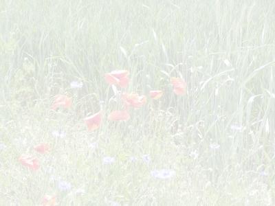 Mohnblumen Briefpapier 2