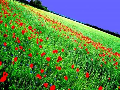Im Opiumrausch :))