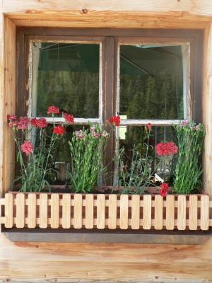 Fenster und Blumen