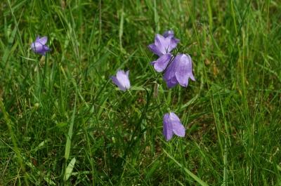 Blumenwiese 6