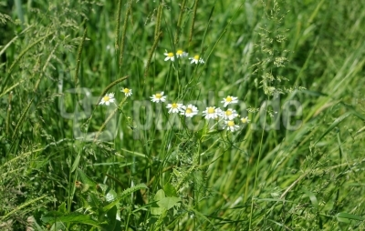 Blumenwiese 7