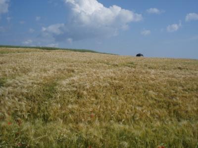 Fruchtbare Felder