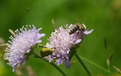 Blumenwiese 11