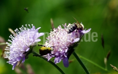Blumenwiese 11.1